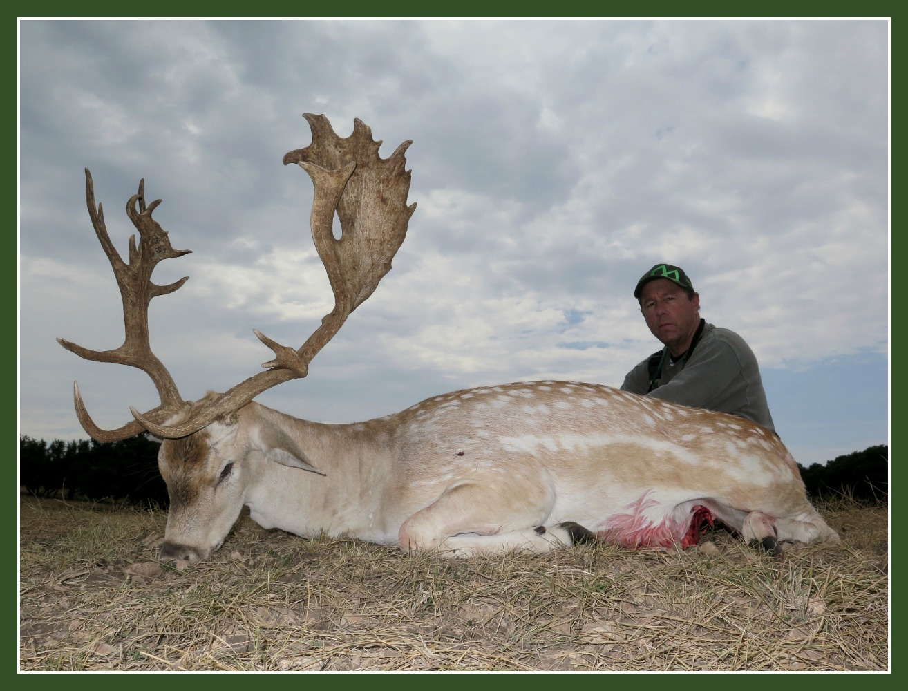 Fallow Deer Hunting Texas