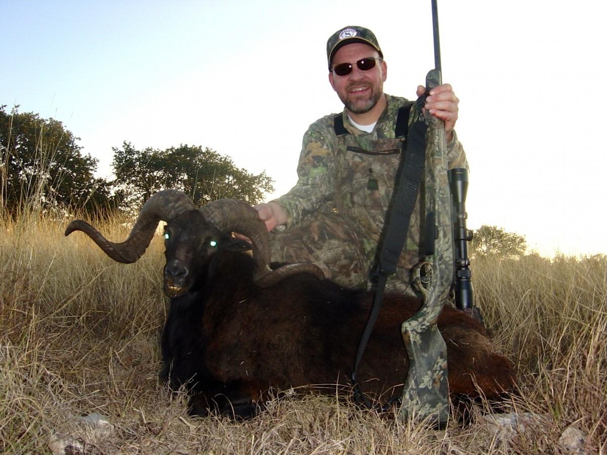 Black Hawaiian Sheep - Texas Exotic Hunts