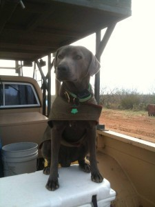Whitetail Deer Hunts - Deer Tracking Dog