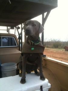 Whitetail Deer Hunts - Deer Tracking Dog