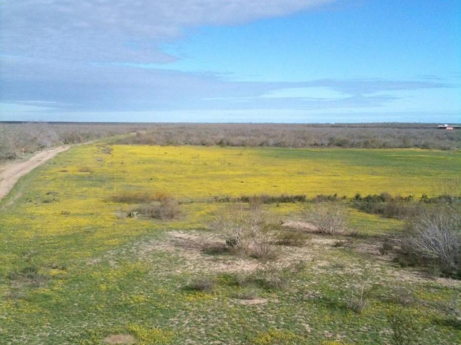 Whitetail Deer Hunts in Texas
