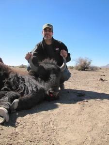 Texas Bison Hunt