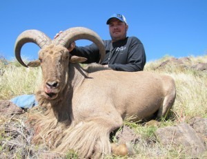 Double Diamond Outfitters - Aoudad Hunts in Texas