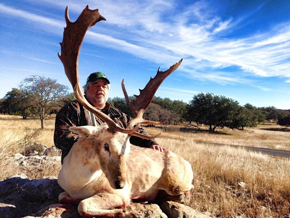 Fallow Deer - Texas Exotic Hunts