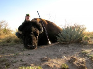 Bison hunts in Texas