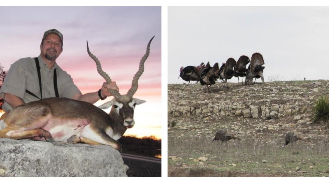 Exotic Hunting in Texas – Beautiful Blackbuck