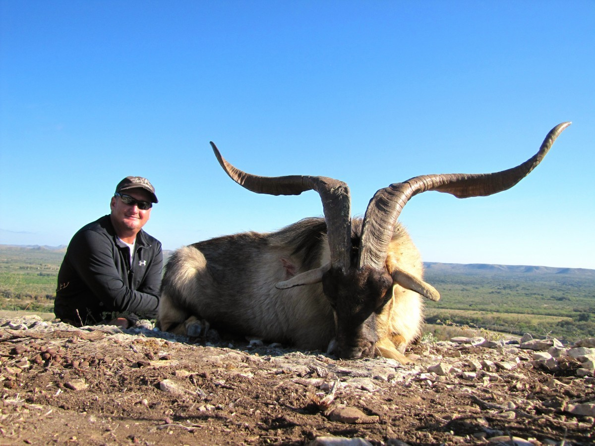 Catalina Goat - Texas Exotic Hunts