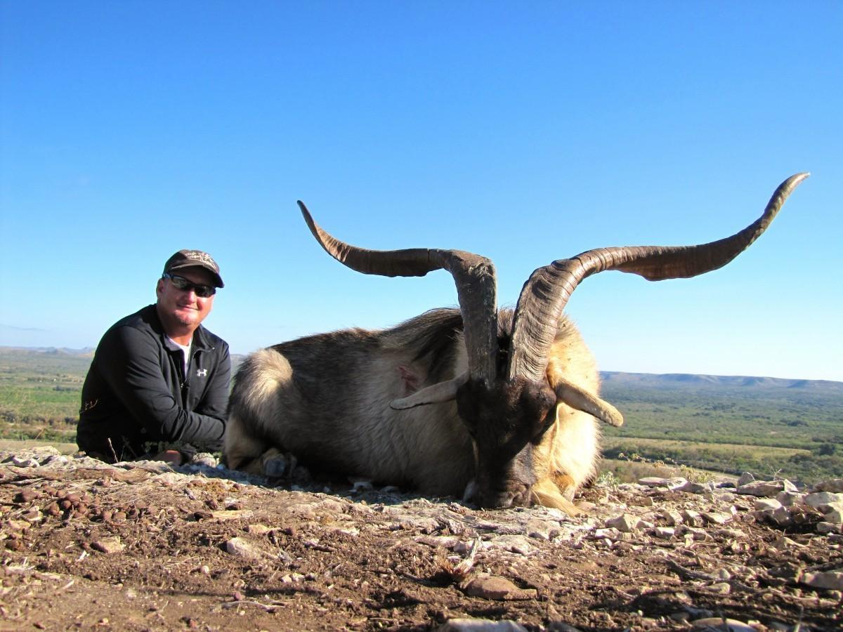 Catalina Goat - Texas Exotic Hunts