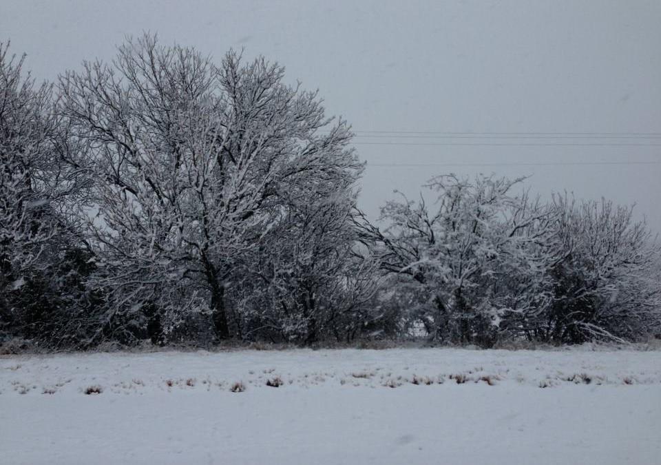Aoudad Hunt Texas – Winterwonderland