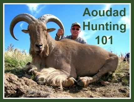 Aoudad Hunting 101